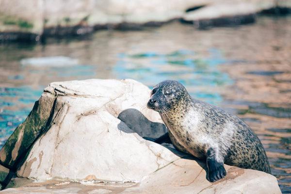 Seal WSLAP LR